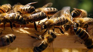 beekeeping is one of the monastic arts
